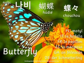 multilingual flashcards butterfly