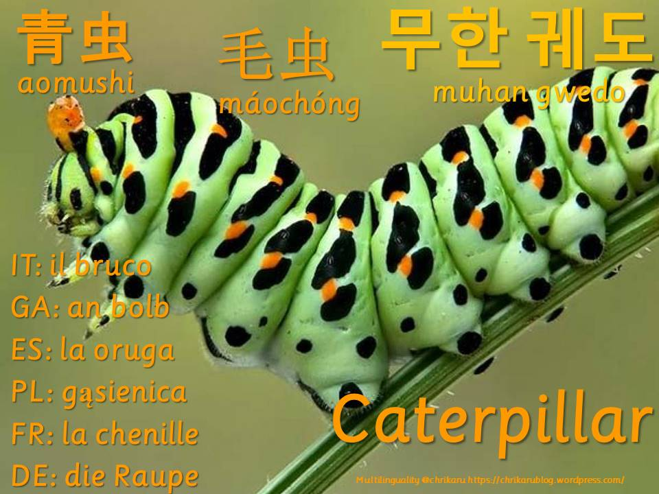 multilingual flashcards caterpillar