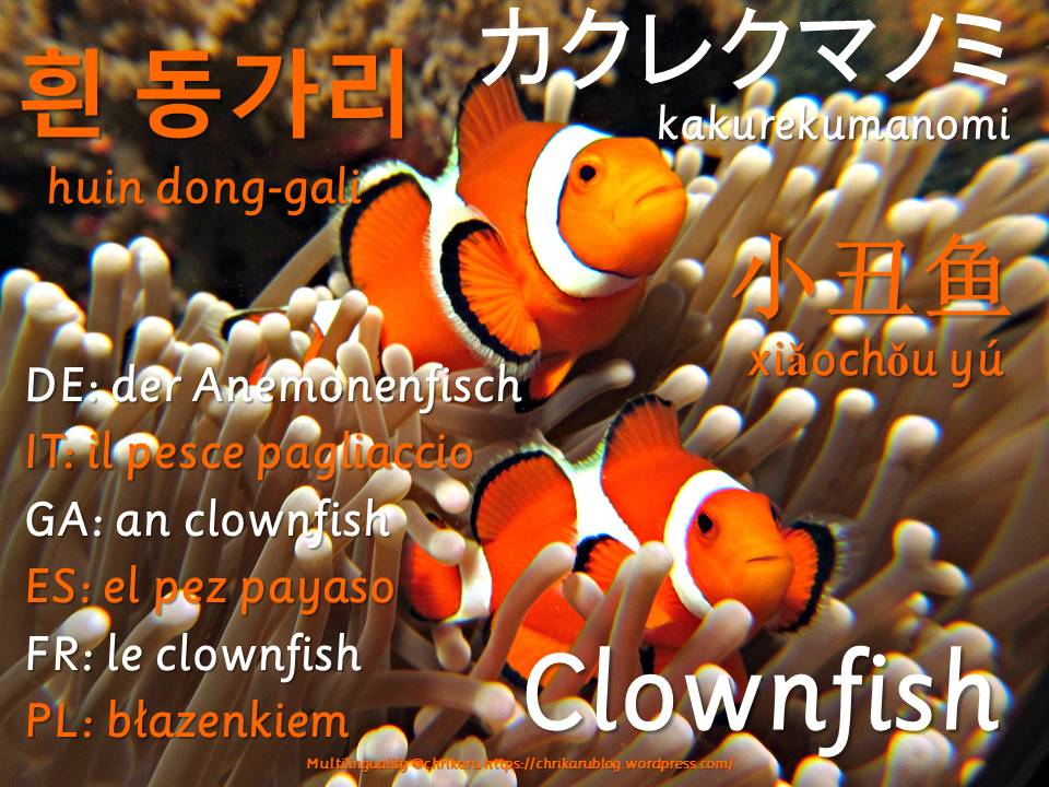 multilingual flashcards clownfish