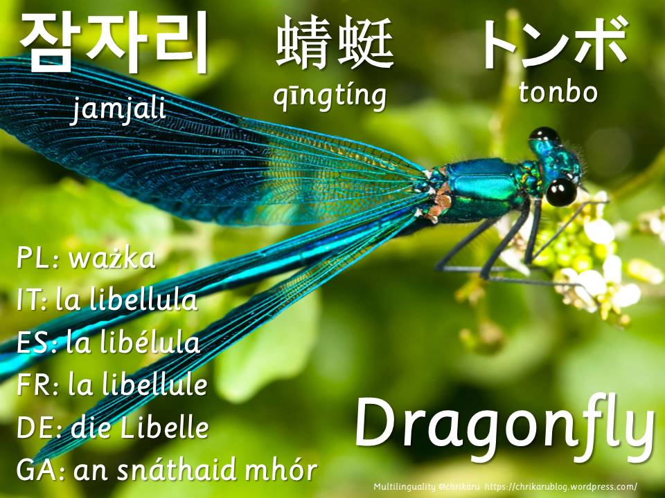 multilingual flashcards dragonfly
