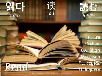 multilingual flashcards read