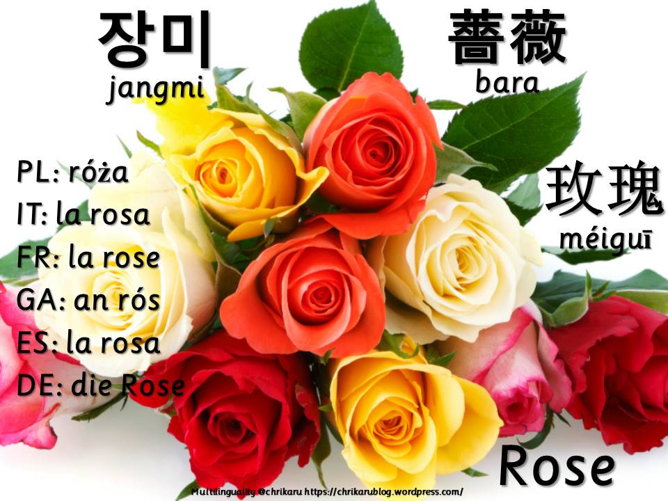 multilingual flashcards rose