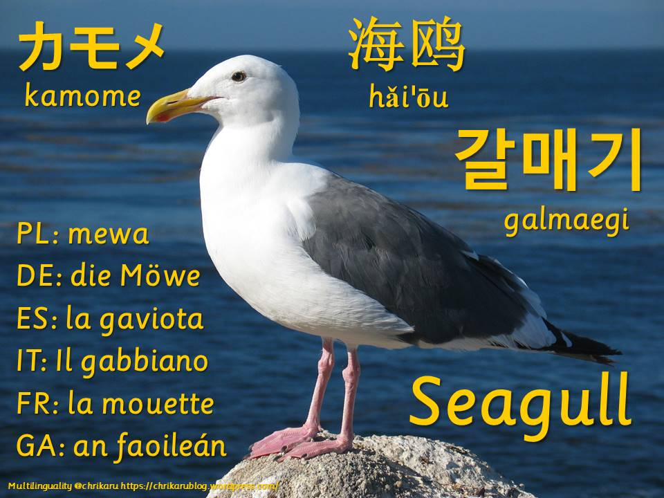 multilingual flashcards seagull