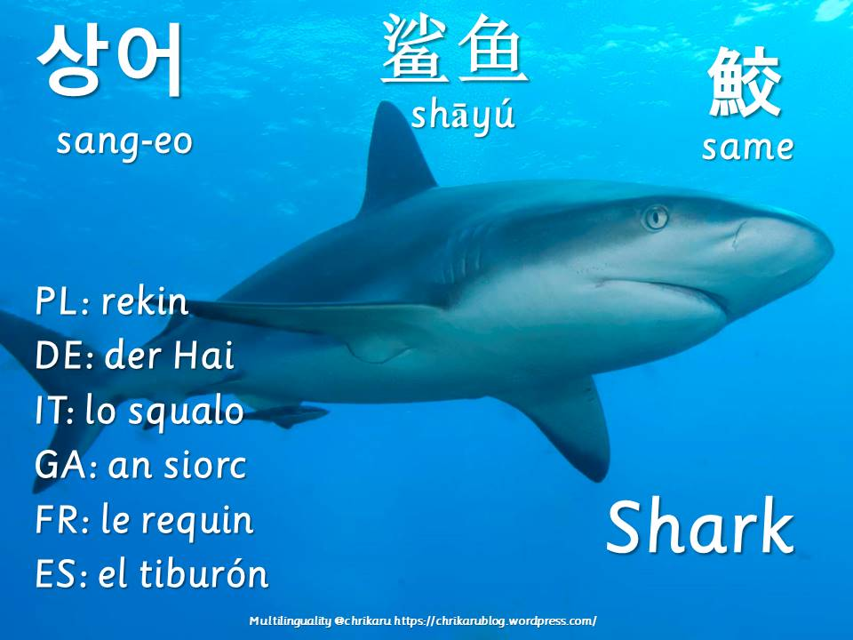 multilingual flashcards shark