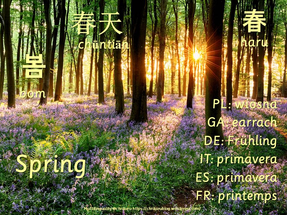multilingual flashcards spring