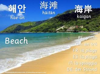 multilingual flashcards updated beach