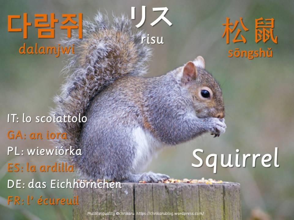 multilingual flashcards updated14