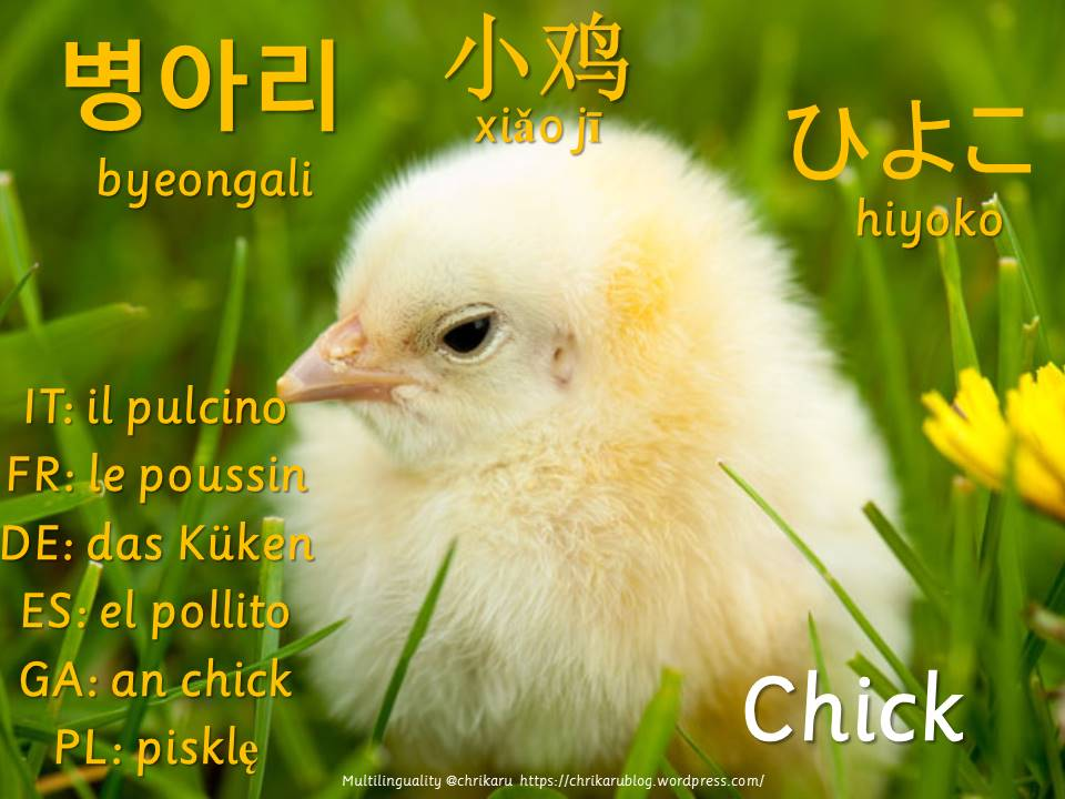 multilingual flashcards7
