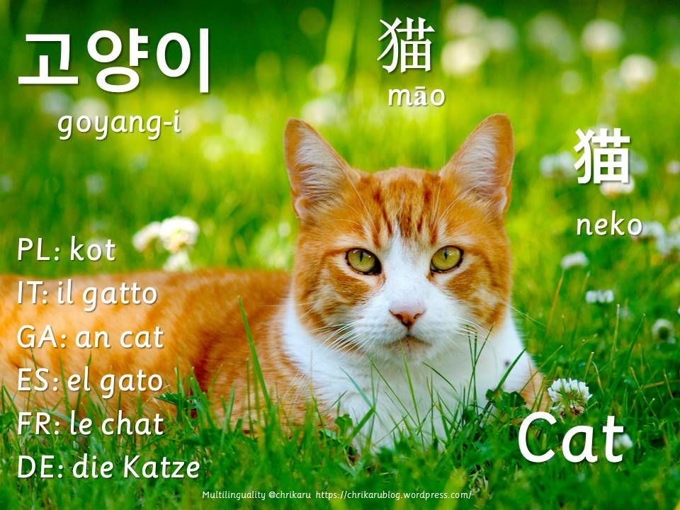 multilingual flashcards updated cat