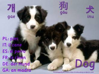 multilingual flashcards updated dog