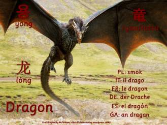 multilingual flashcards updated dragon