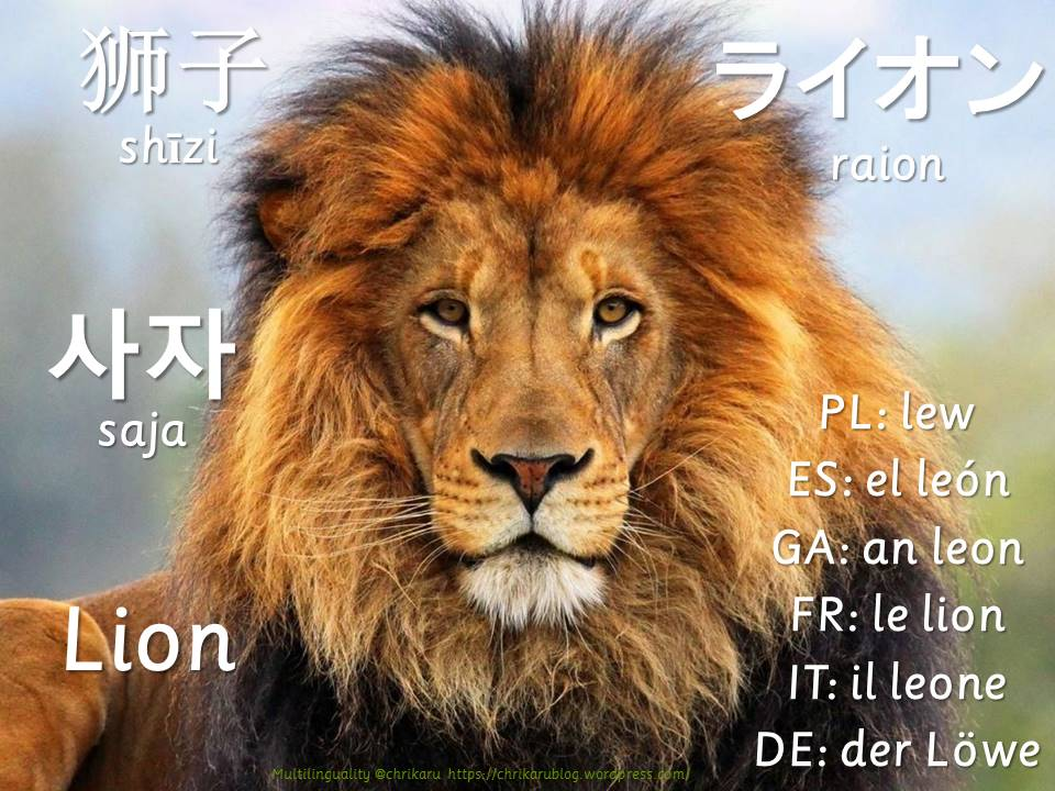 multilingual flashcards updated lion