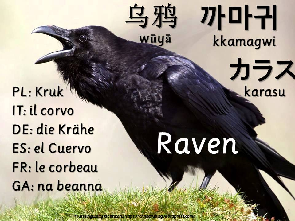 multilingual flashcards updated raven