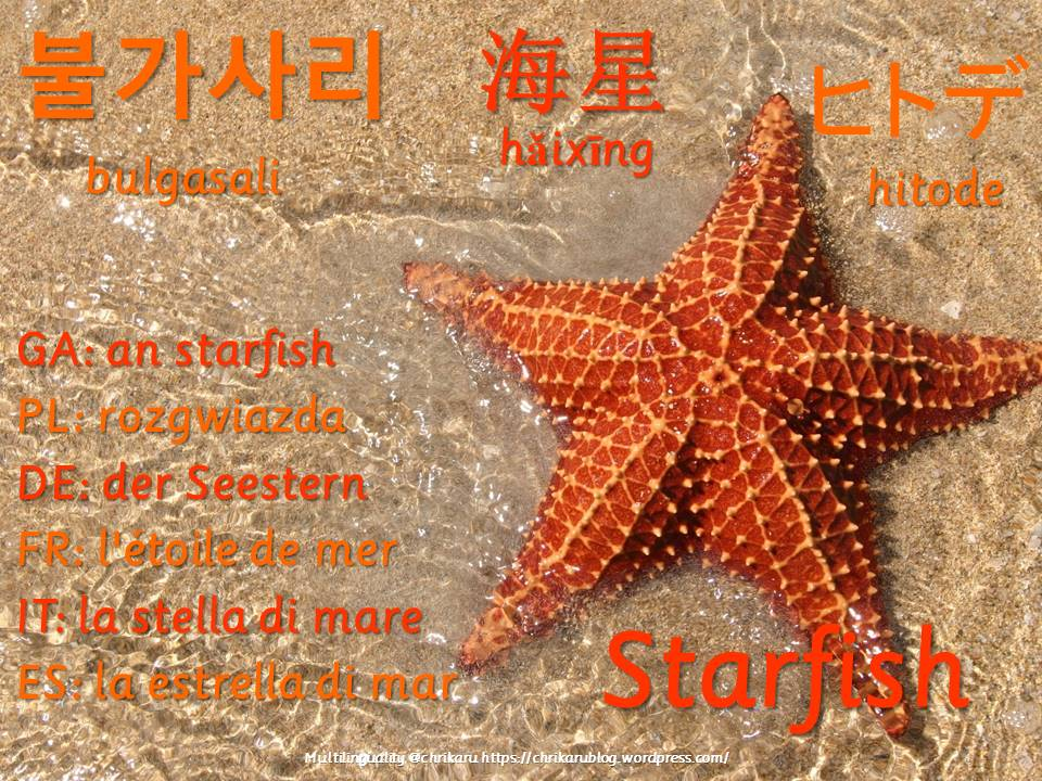 multilingual flashcards updated starfish