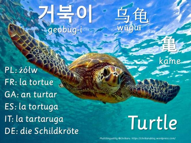 multilingual flashcards updated turtle