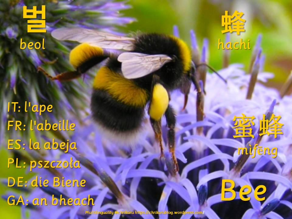 multilingual flashcards updated bee