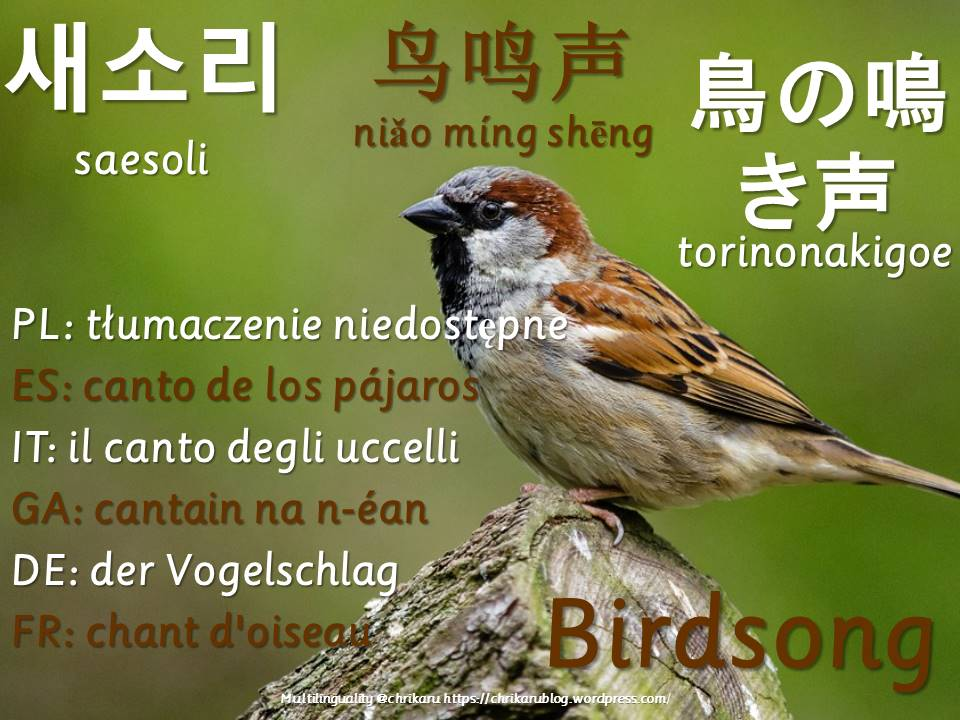 multilingual flashcards updated birdsong