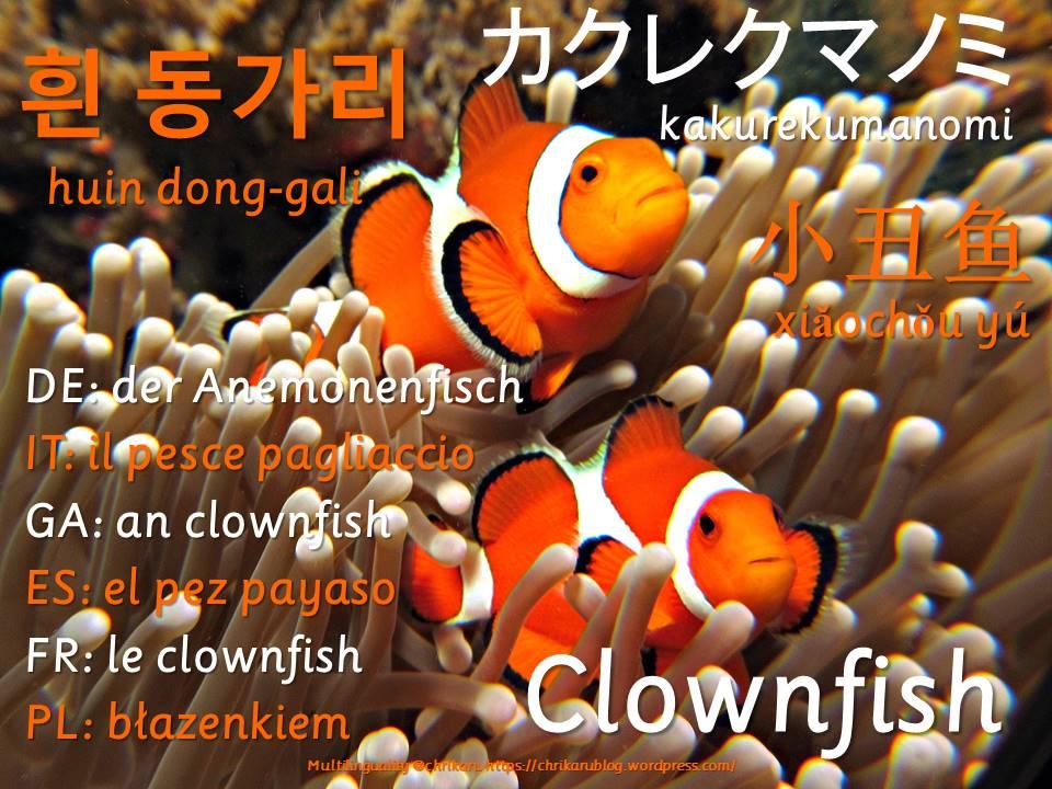 multilingual flashcards updated clownfish