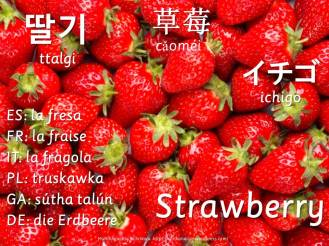 multilingual flashcards updated strawberry