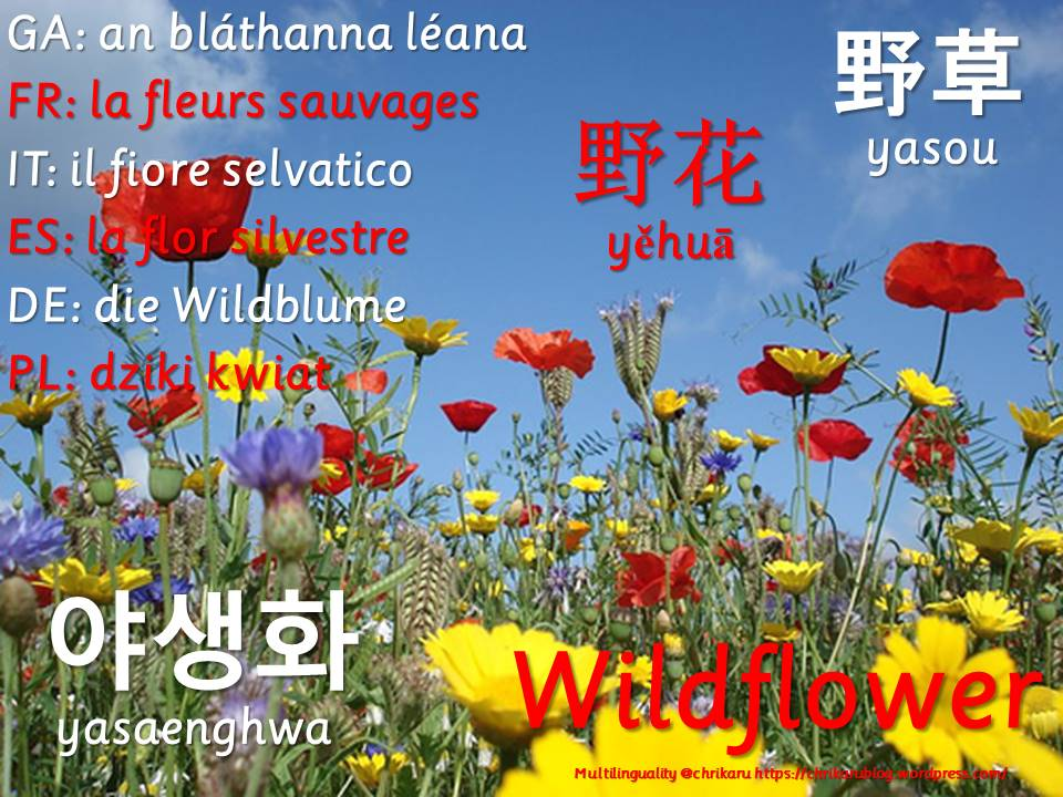multilingual flashcards updated wildflower