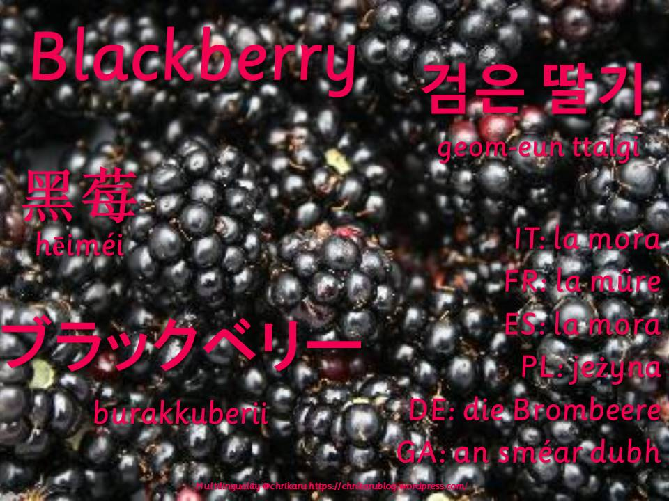 multilingual flashcards blackberry