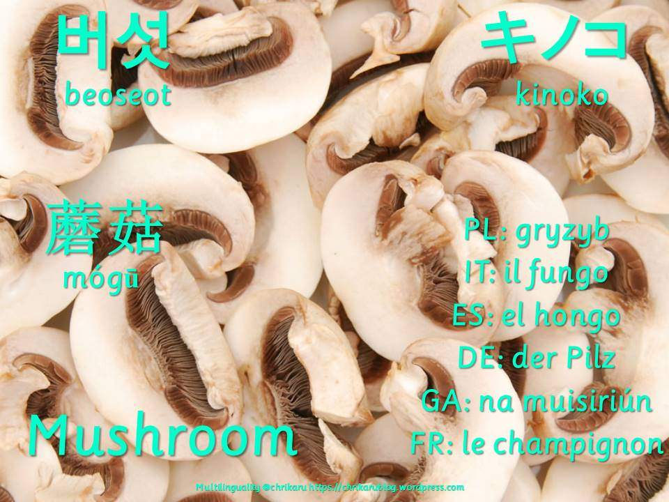 multilingual flashcards mushroom