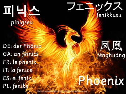 multilingual flashcards phoenix