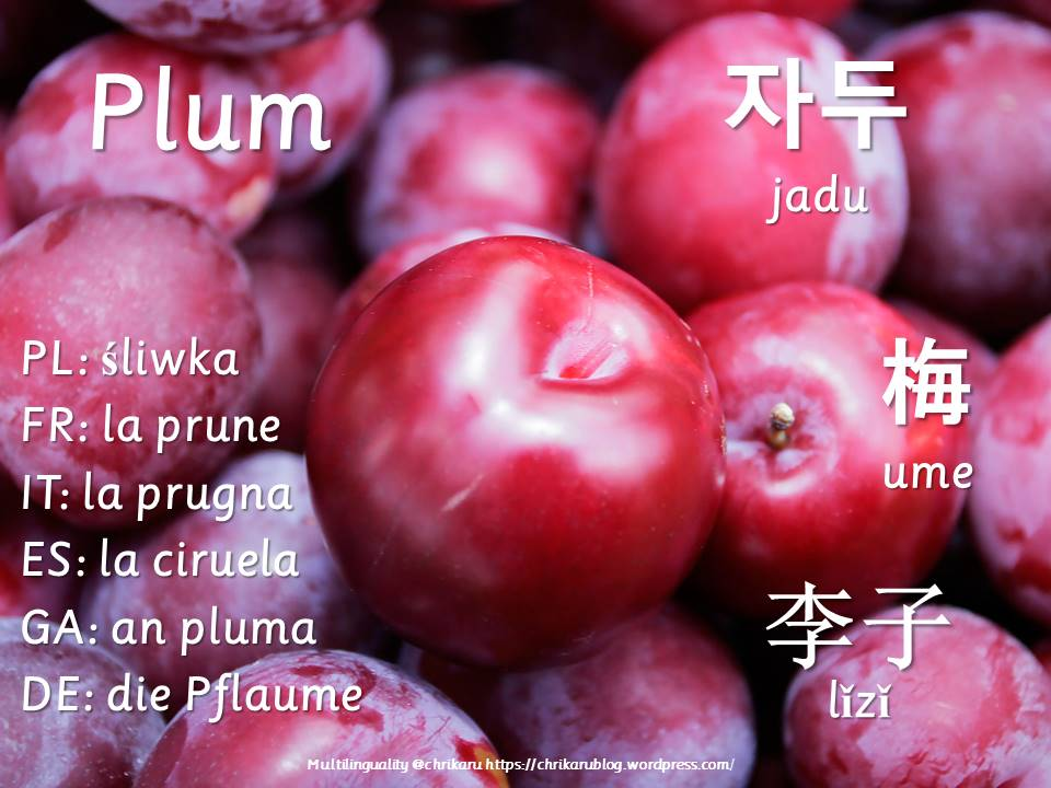 multilingual flashcards plum