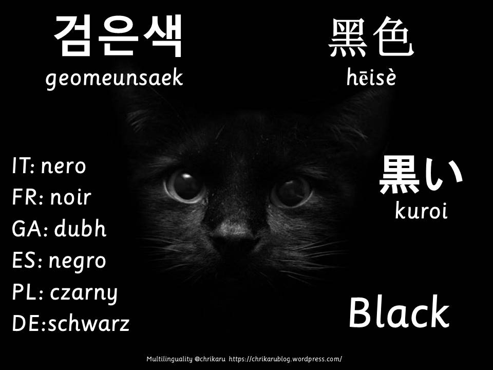 multilingual flashcards black
