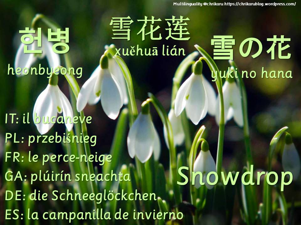 multilingual flashcards snowdrop