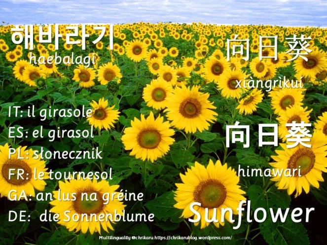 multilingual flashcards sunflower