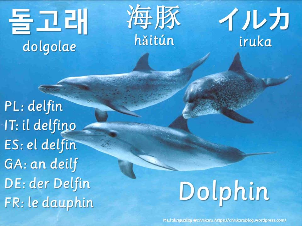 multilingual flashcards dolphin