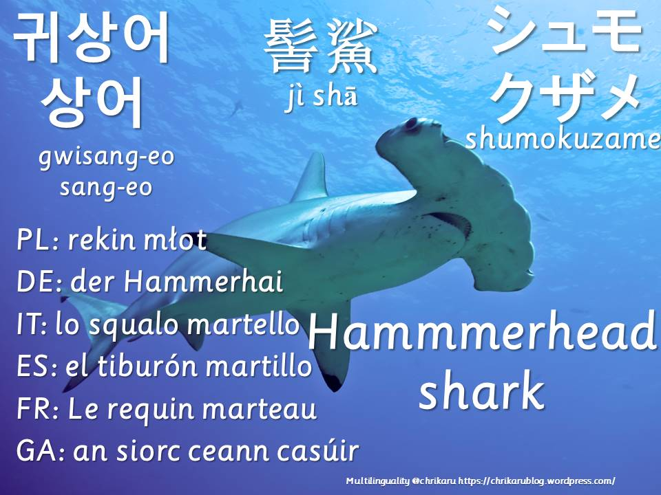 multilingual flashcards hammerhead shark