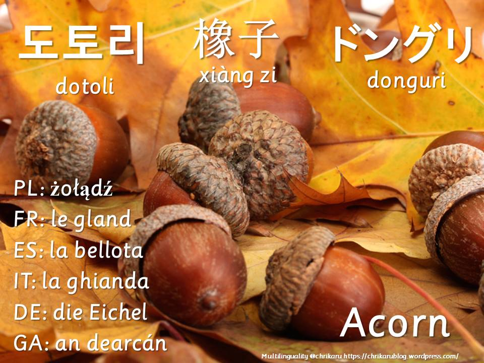 multilingual flashcards acorn