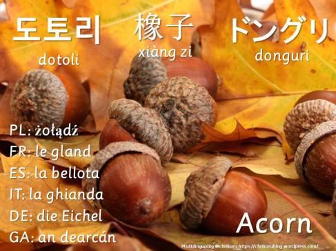 multilingual flashcards acorn