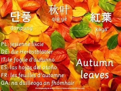 multilingual flashcards autumnleaves