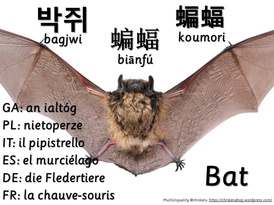multilingual flashcards bat