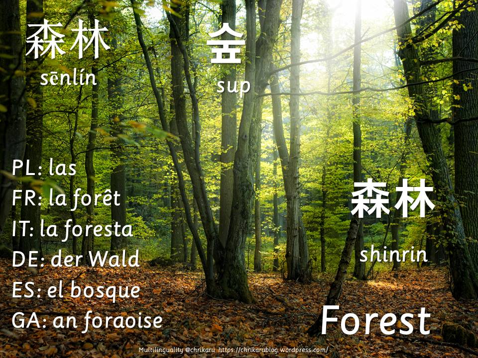 multilingual flashcards forest