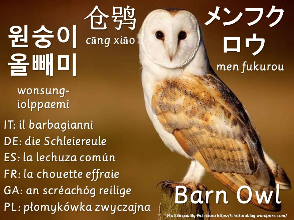 multilingual flashcards owl