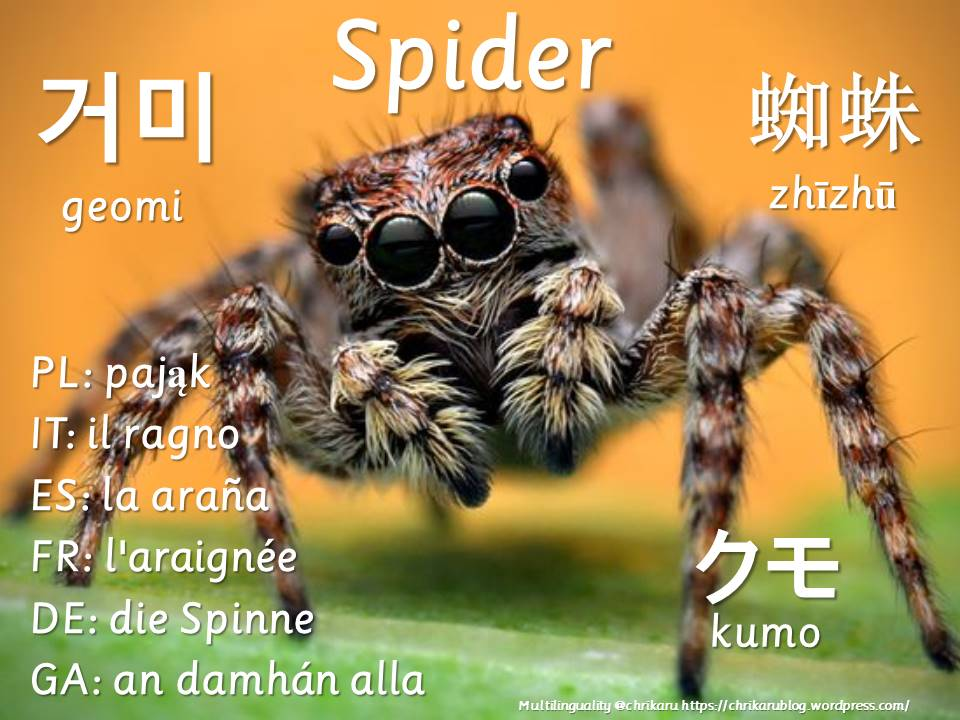 multilingual flashcards spider