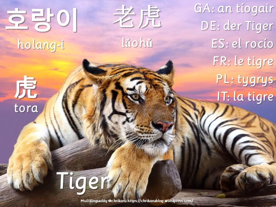 multilingual flashcards tiger