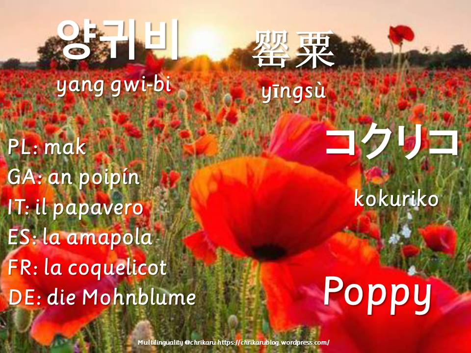 multilingual flashcards poppy