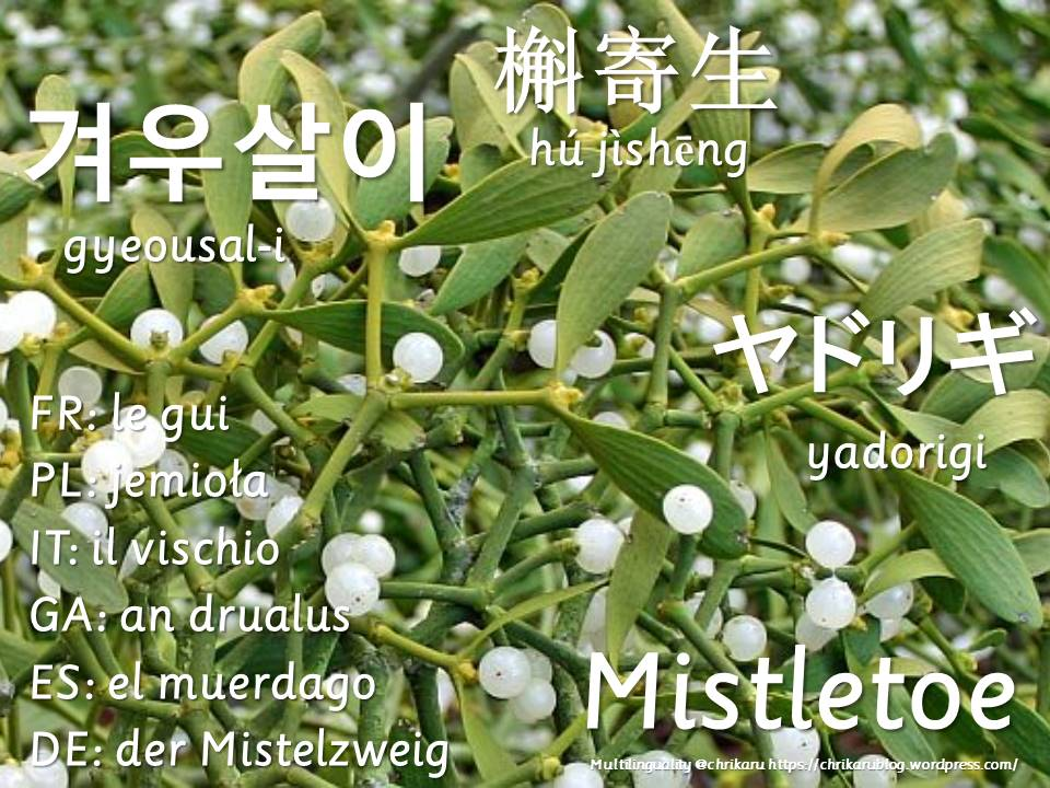 multilingual flashcards mistletoe