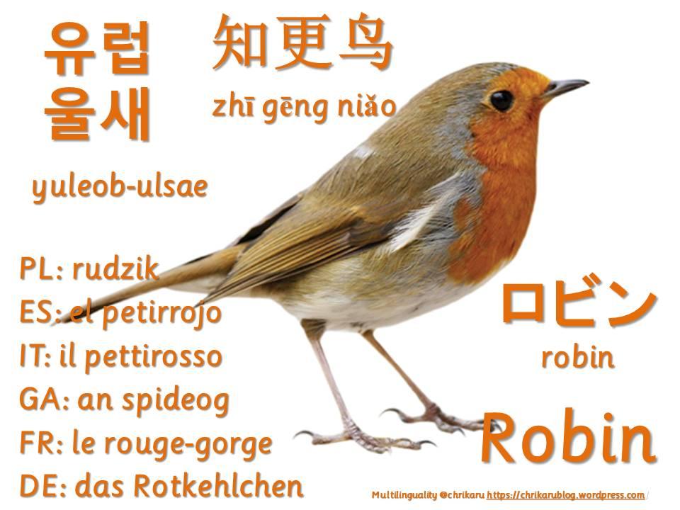 multilingual flashcards robin