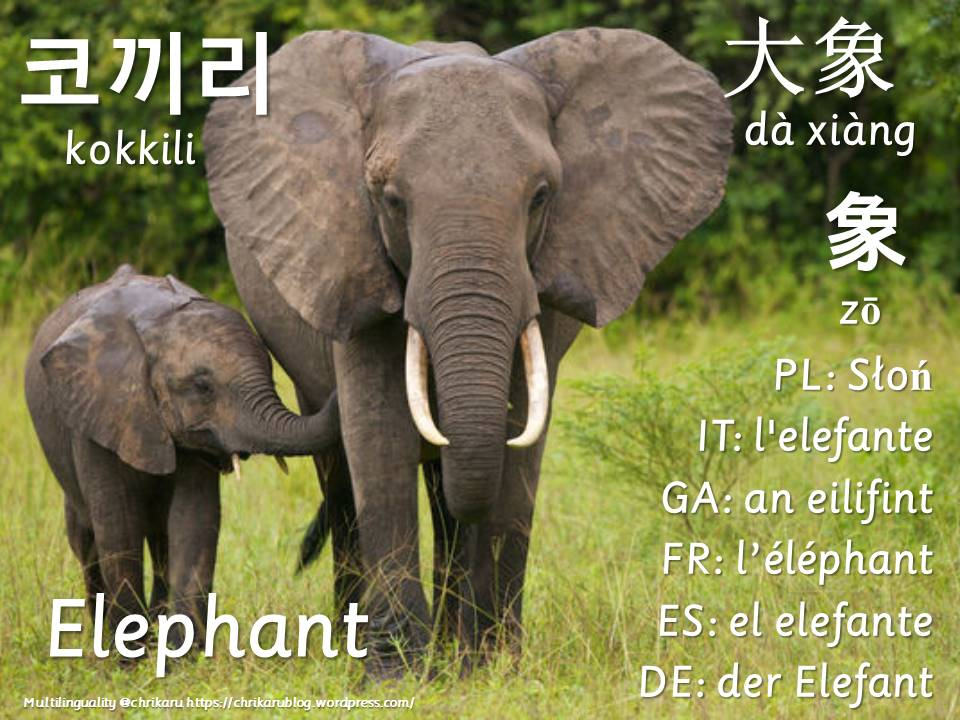 multilingual flashcards elephant