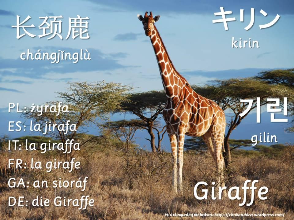 multilingual flashcards giraffe
