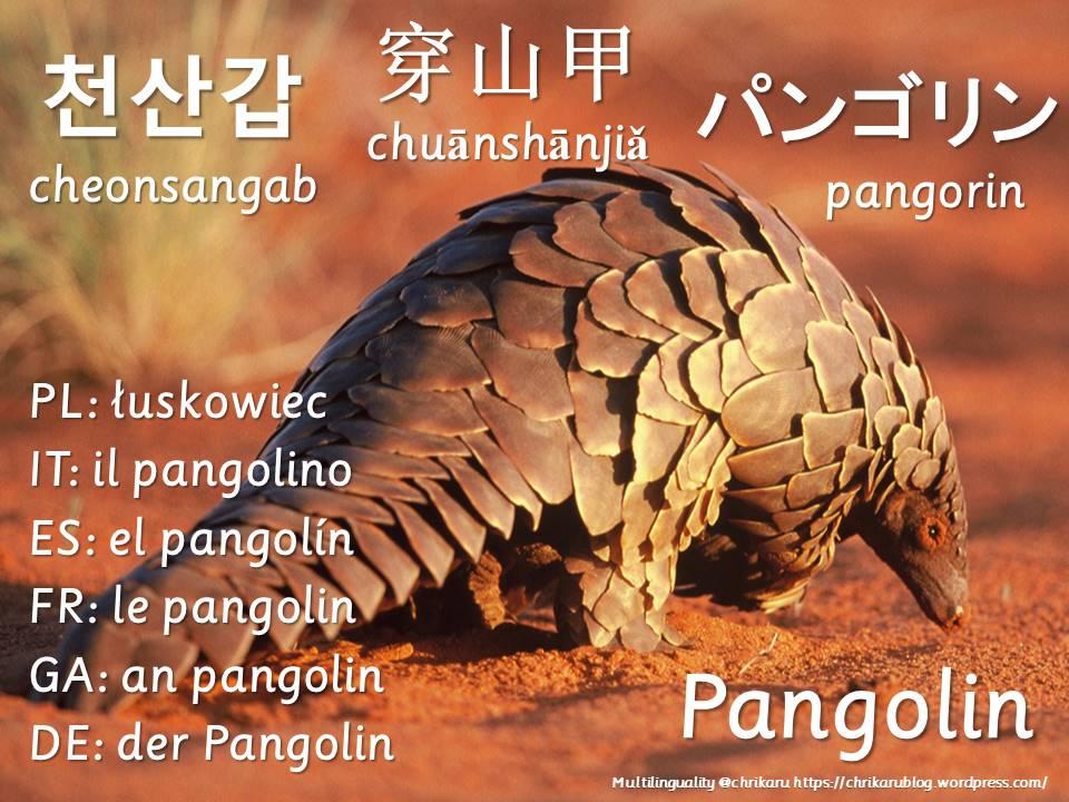 multilingual flashcards pangolin