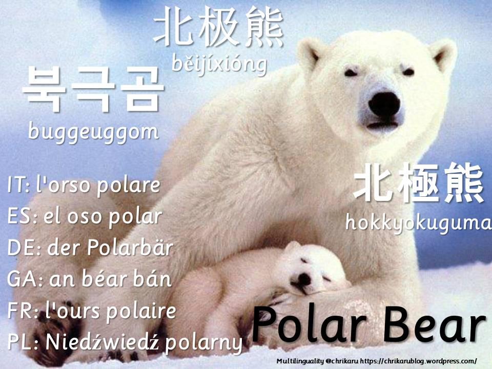 multilingual flashcards polarbear