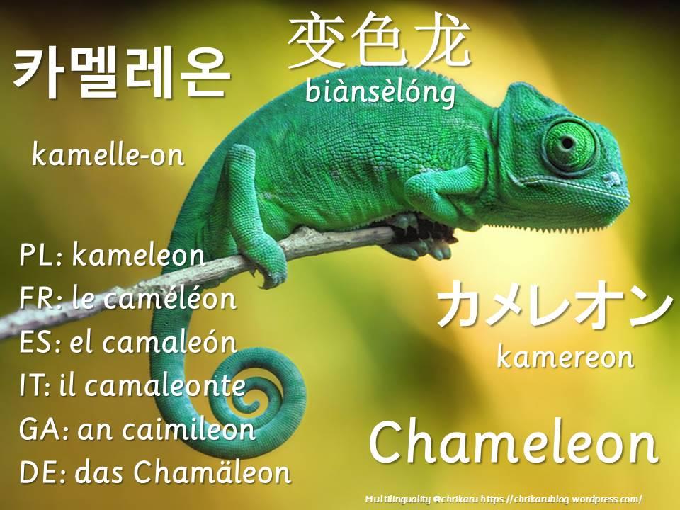 multilingual flashcards chameleon