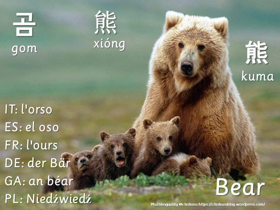 multilingual flashcards bear